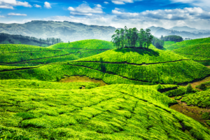 Munnar packages