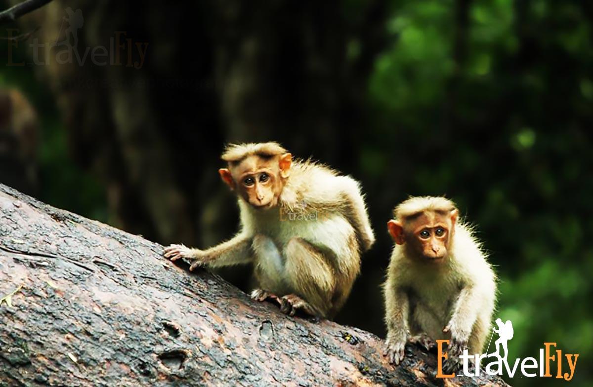 chinnar wildlife sanctuary Munnar Packages,Munnar
