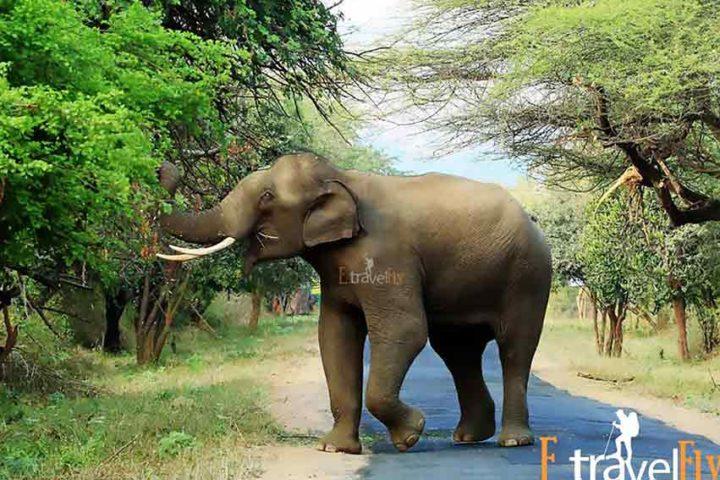 Munnar Packages, Kerala Packages , Munnar, Kerala Tourism,