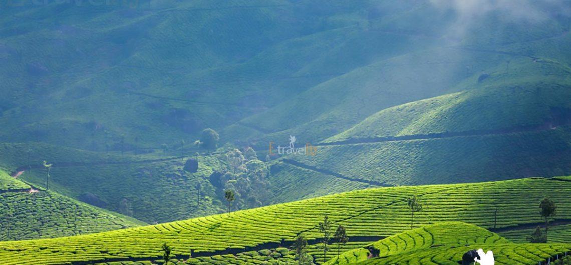 Munnar kerala Munnar Packages kerala tourism Munnar tourism