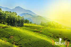 Munnar packages @ Etravelfly