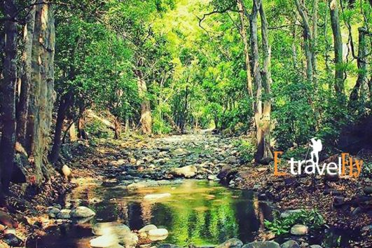chinnar wildlife sanctuary Munnar Packages,Munnar Sightseeing