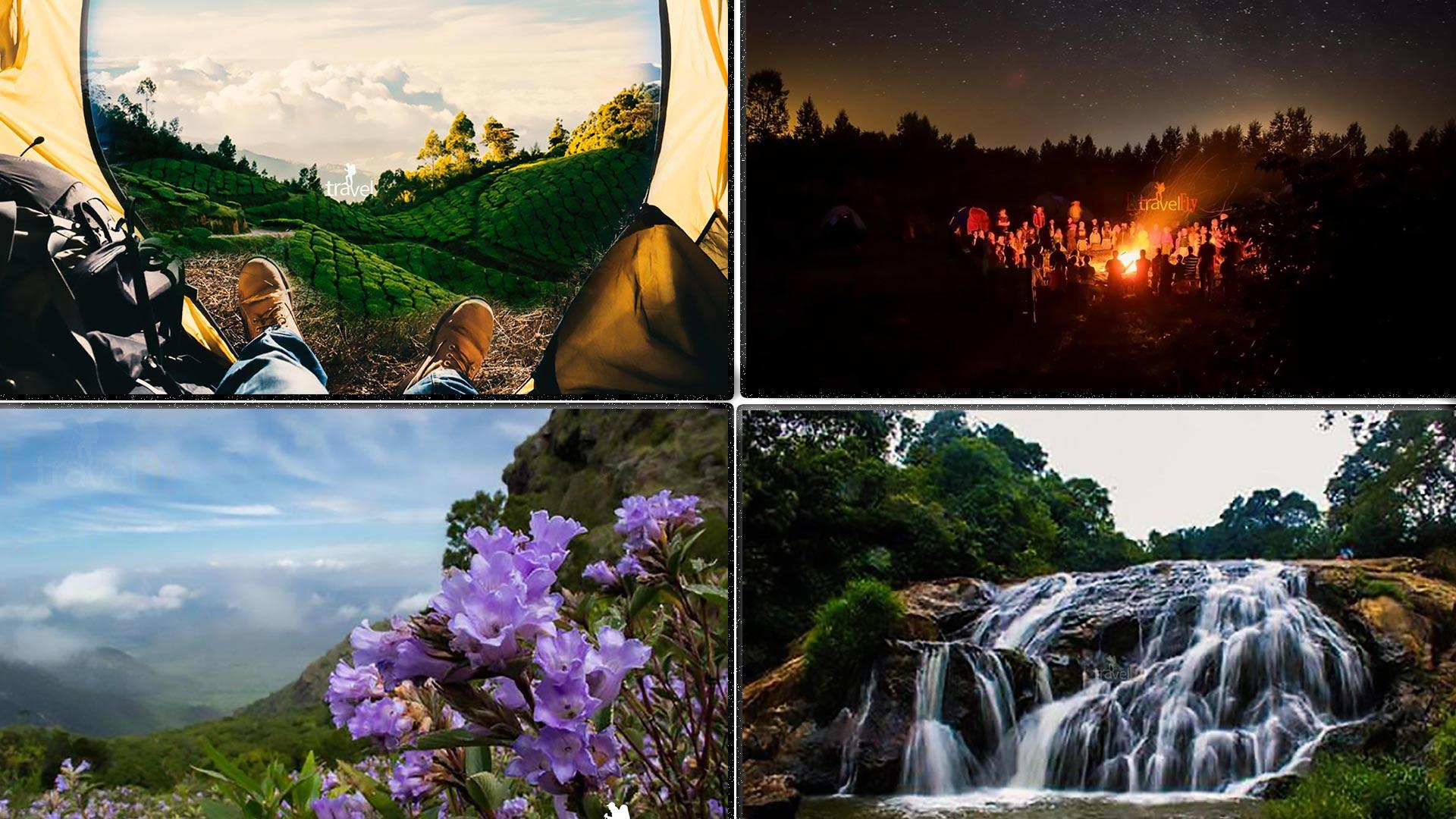 Kotagiri Neelakuriji Blooming Trek And Camping In Nilgiri Hills