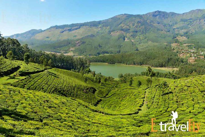 Mattupetty Dam Munnar Packages, Kerala Packages , Munnar, Kerala Tourism,