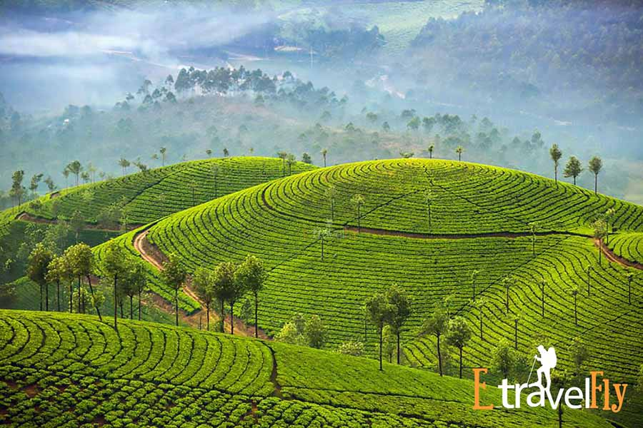 Photo Pinot Munnar Packages, Kerala Packages , Munnar, Kerala Tourism,