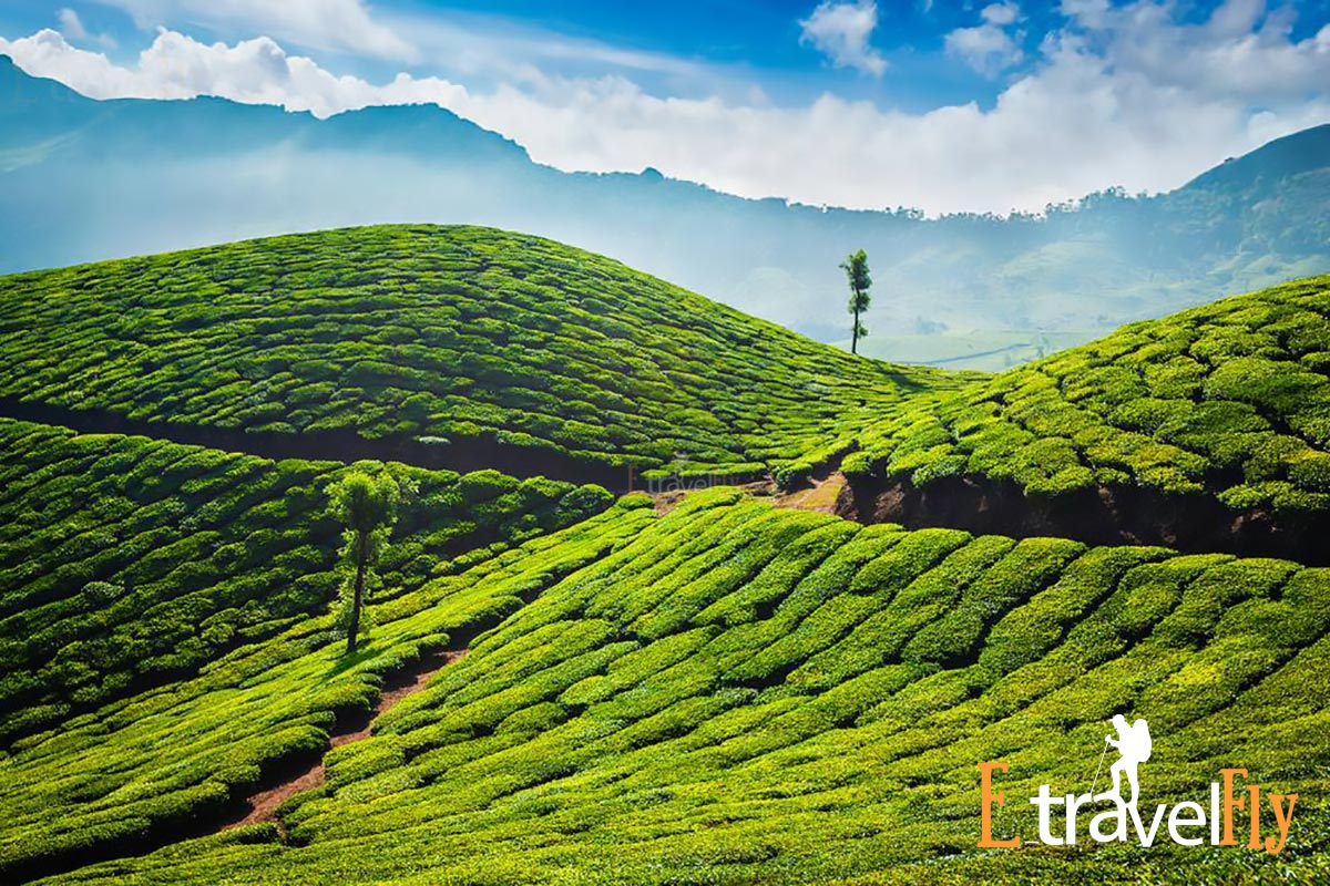 Munnar packeges